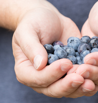 Hands holding blueberries